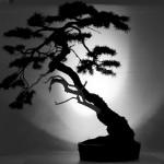 bonsai-455628_1920-pixbay-1200x800
